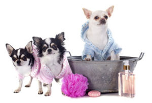 Dog Grooming Service_3